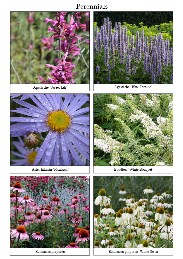 Ian Barker Garden Design Planting List For The New Wave At