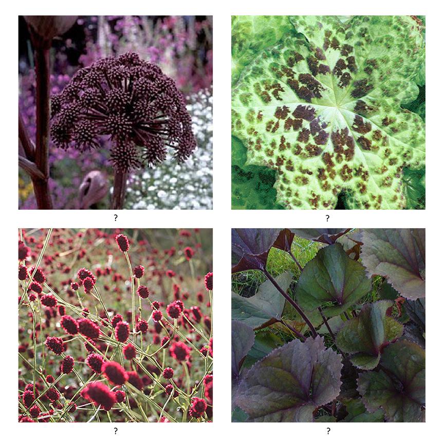 Garden Design Blog Melbourne Container Gardening Ideas