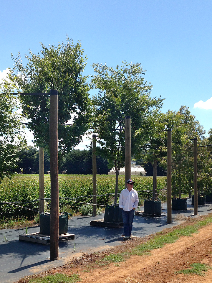 Wes Fleming From Flemings Nurseries Up In Monbulk, Victoria Is Providing  Birch And Pear Trees