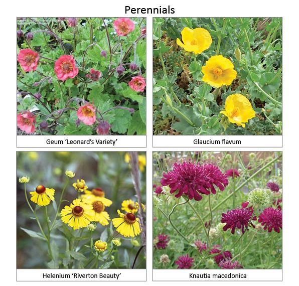 Perennials3