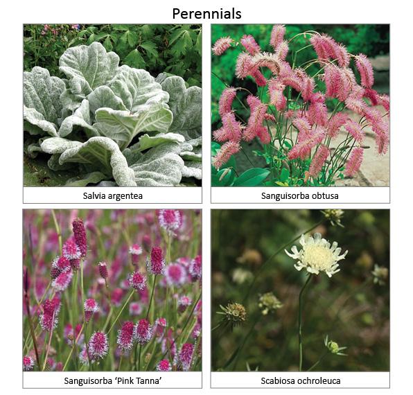 Perennials5