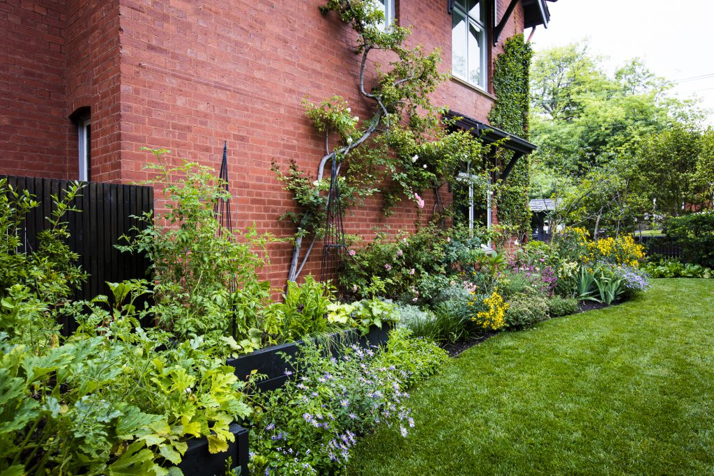 Classic informal side garden at Camberwell Project by Ian Barker Gardens