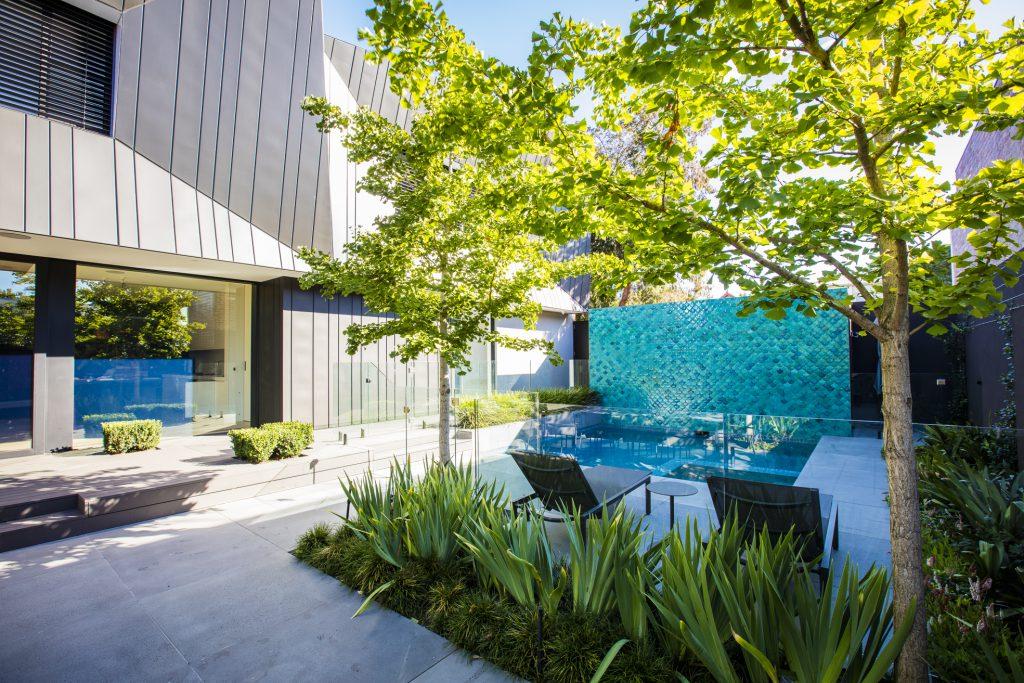 Bayside project by Ian Barker Gardens. Ginkgo biloba feature trees used in garden design
